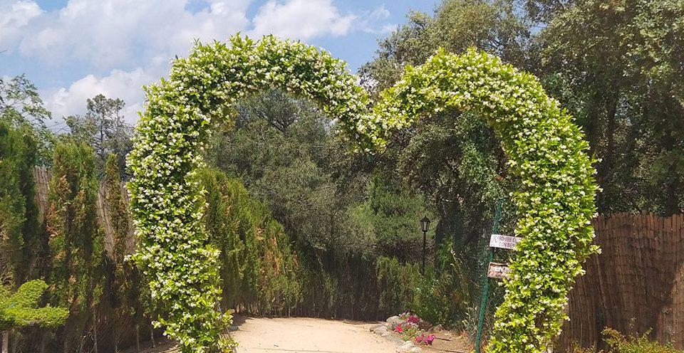 Excursión escolar al Bosque Encantado: jardín de esculturas vegetales vivas y parque temático de minerales